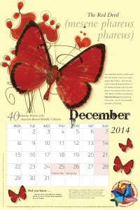 Ang Butterfly Cal 013